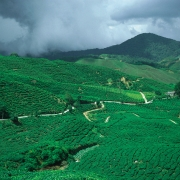 003malezja-cameron-highlands